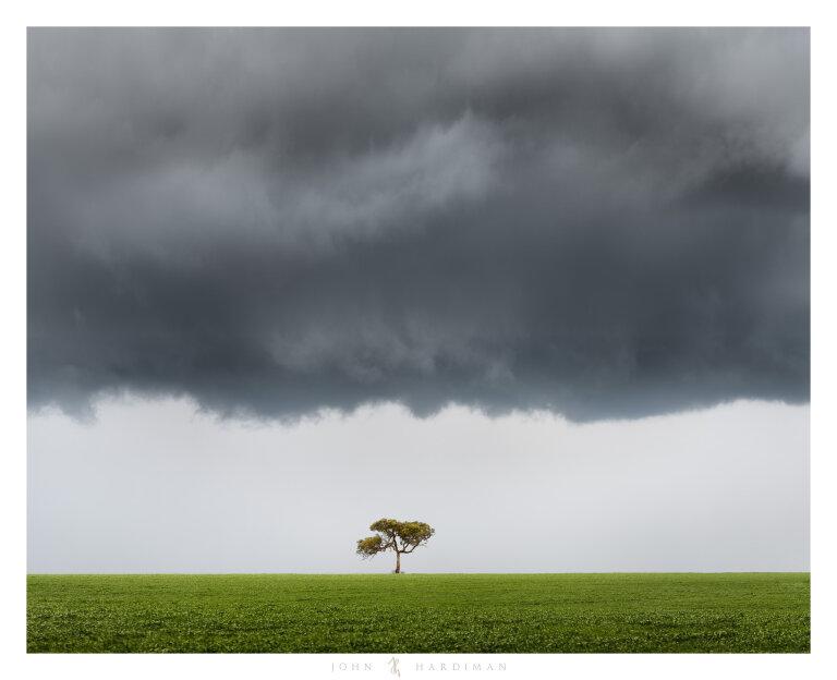 Balliang Tree August