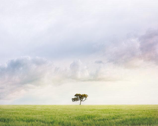 Balliang Tree September