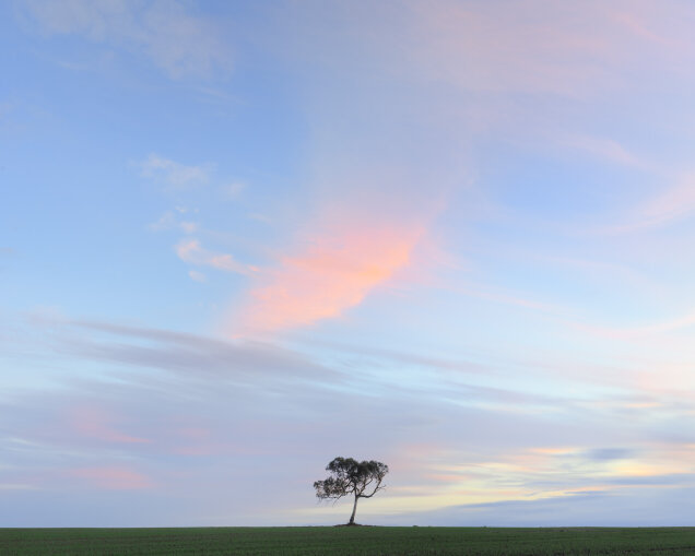 Balliang Tree June