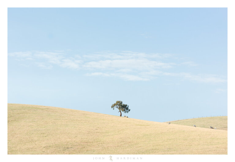 Yarra Valley Tree, April