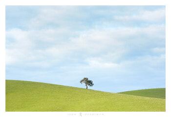 Yarra Valley Tree June