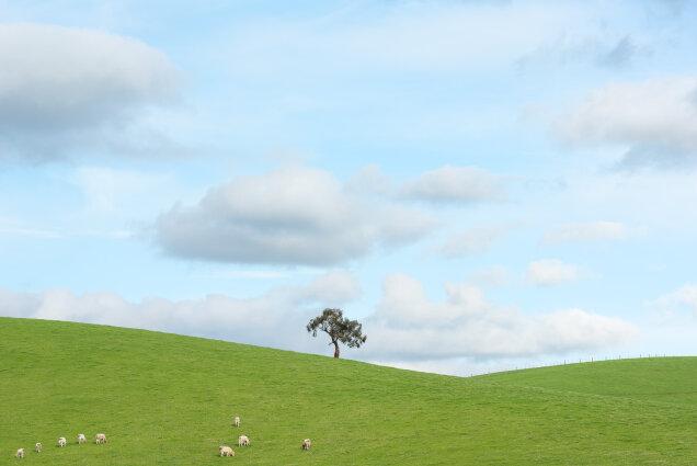 Yarra Valley Tree July