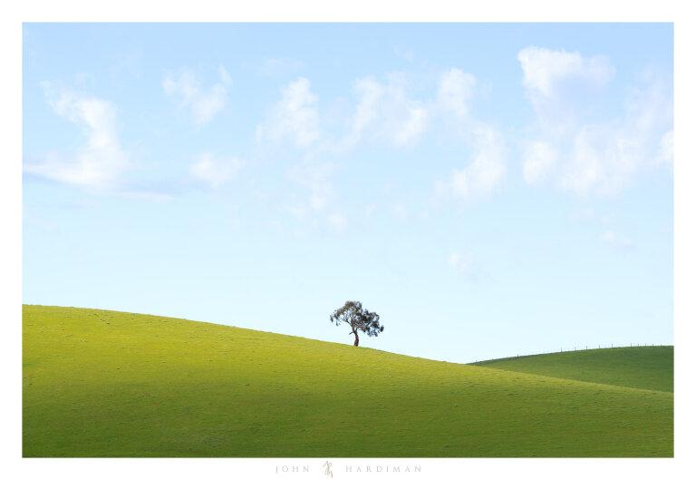 Yarra Valley Tree September