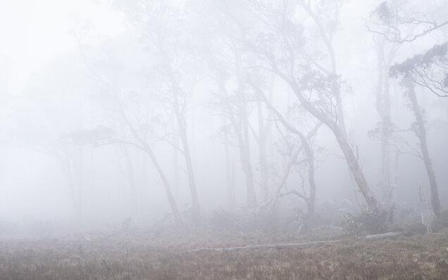 Vale of Belvoir, Tasmania