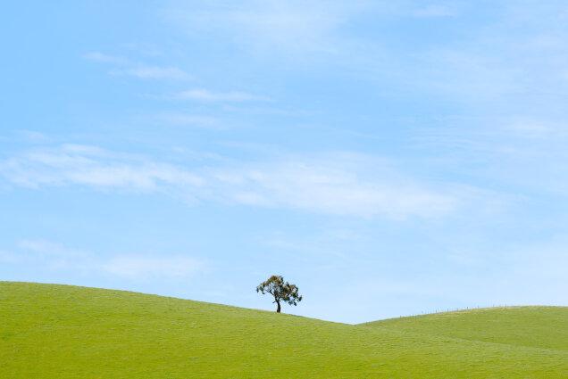 Yarra Valley Tree October