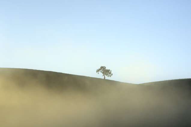 Yarra Valley Tree November
