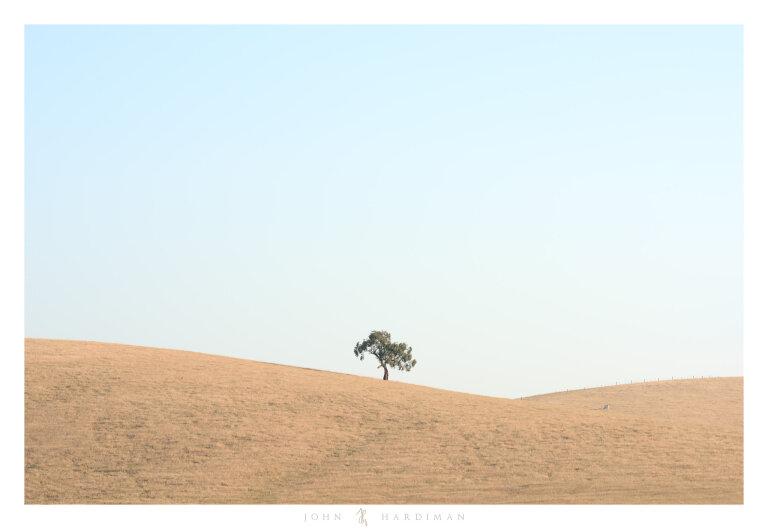 Yarra Valley Tree December