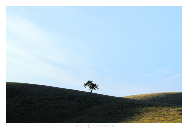 Yarra Valley Tree January