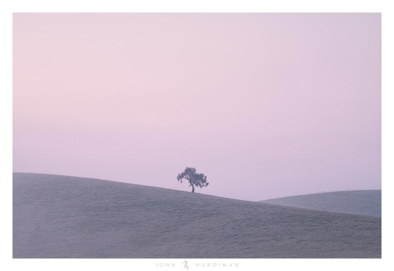 Yarra Valley Tree February