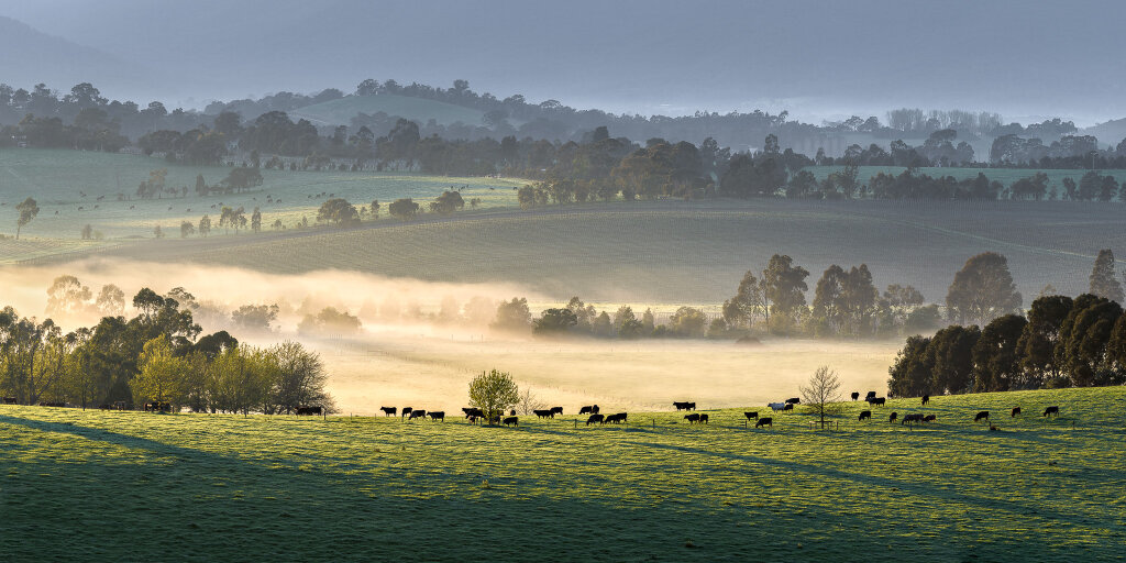 Yarra Valley Mists