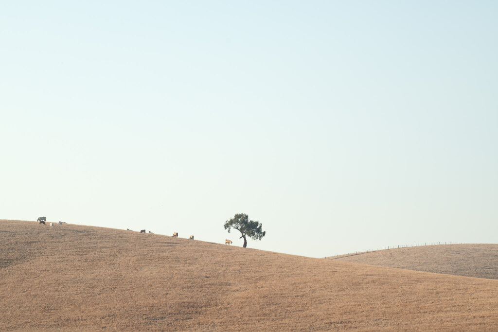Yarra Valley Tree (I) March