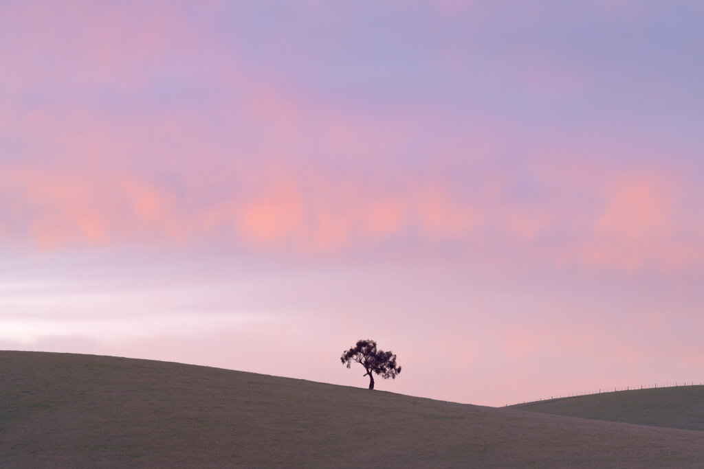 Yarra Valley Tree III (May)