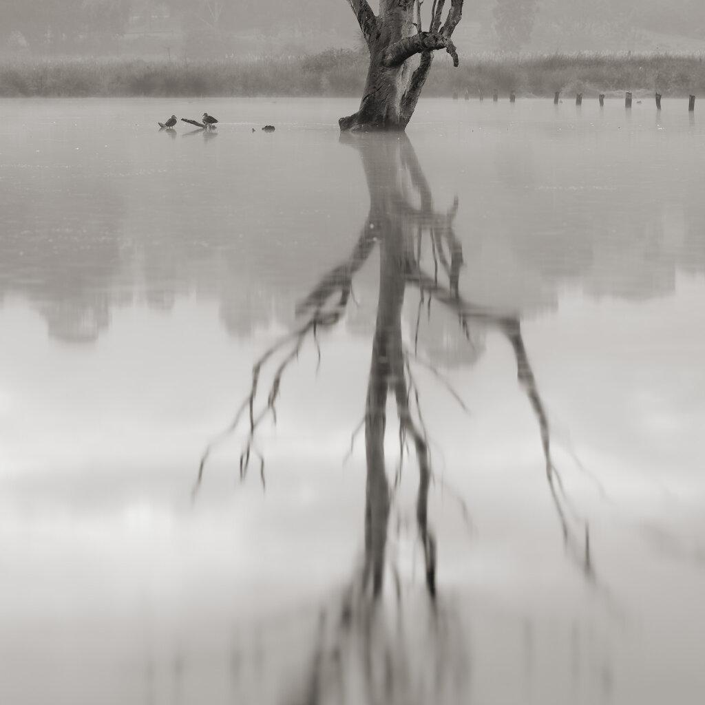 Banyule Wetlands
