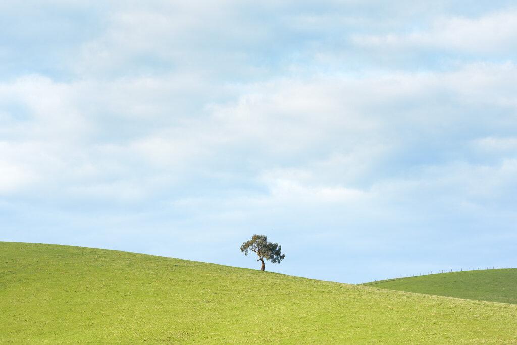 Yarra Valley Tree IV (June)