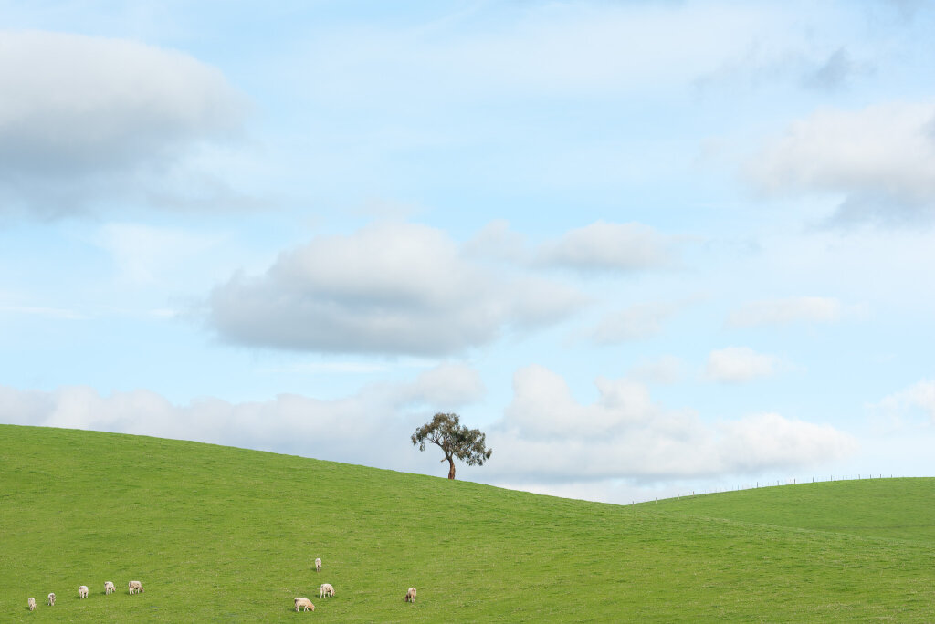 Yarra Valley Tree V (July)