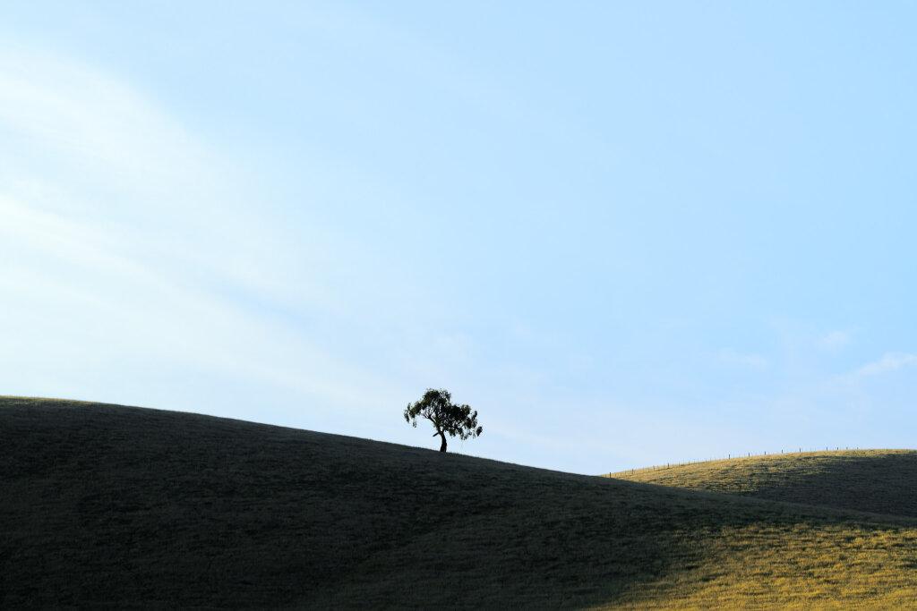 Yarra Valley Tree XI (January)