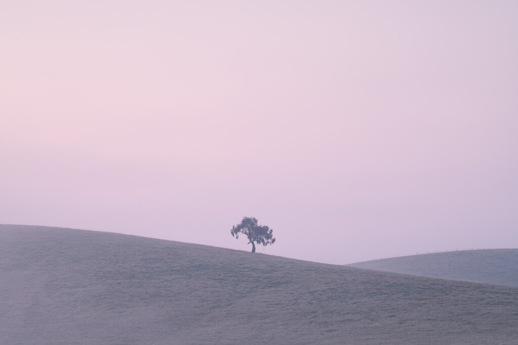Yarra Valley Seasons XII (February)