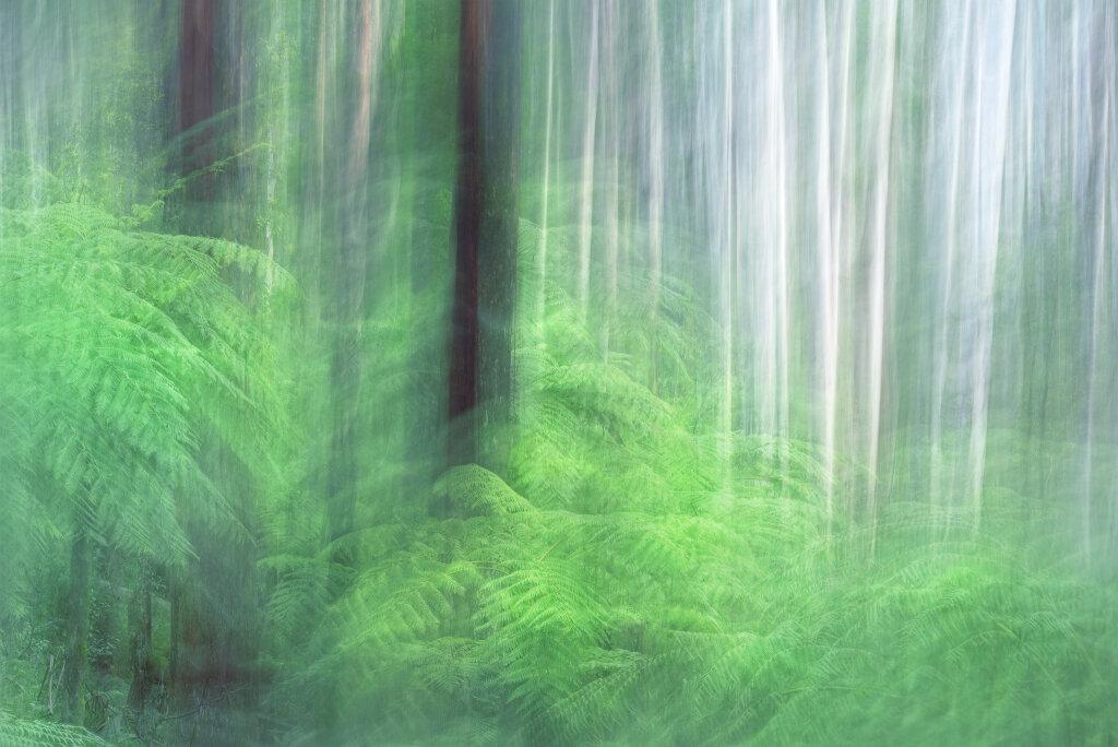 A Walk In The Rainforest