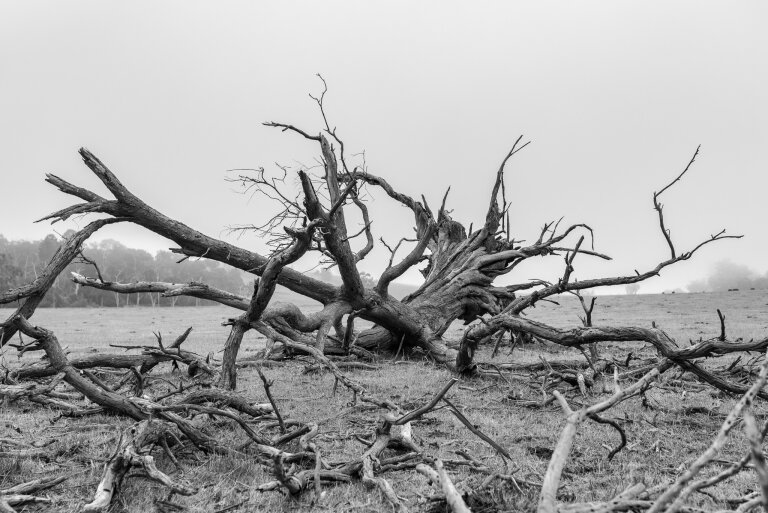 A picture of a dead tree