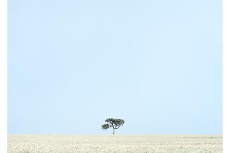 Balliang Tree October