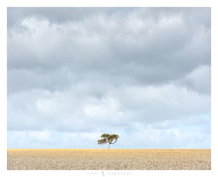 Balliang Tree November