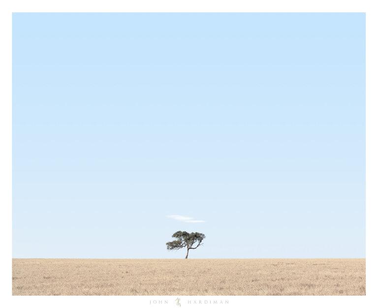 Balliang Tree December
