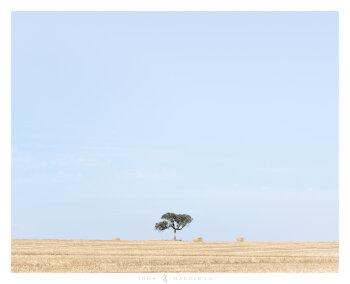 Balliang Tree January
