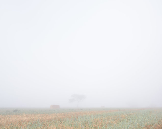 Balliang Tree February