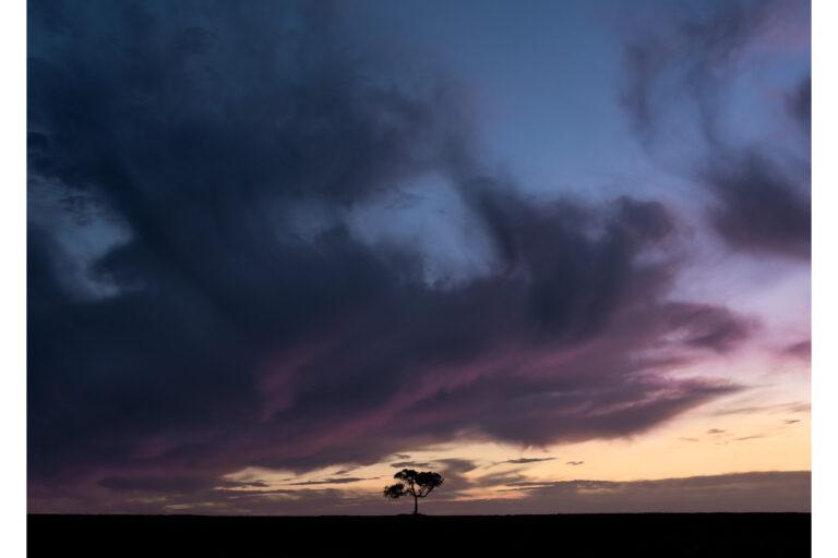 Balliang Tree May