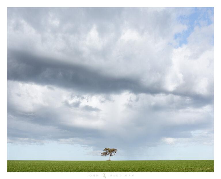 Balliang Tree July