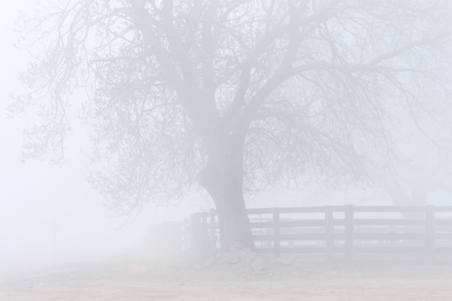 Cattle Yards, High Camp, Victoria