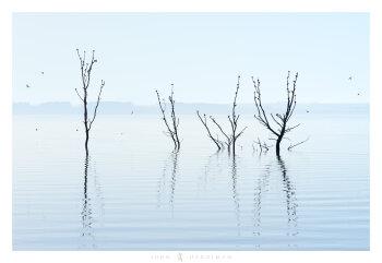 Dance of the Swallows, Lake Burrumbeet, Victoria
