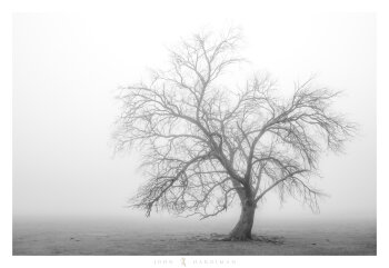 Tree in Black and White, Yarra Valley, Victoria