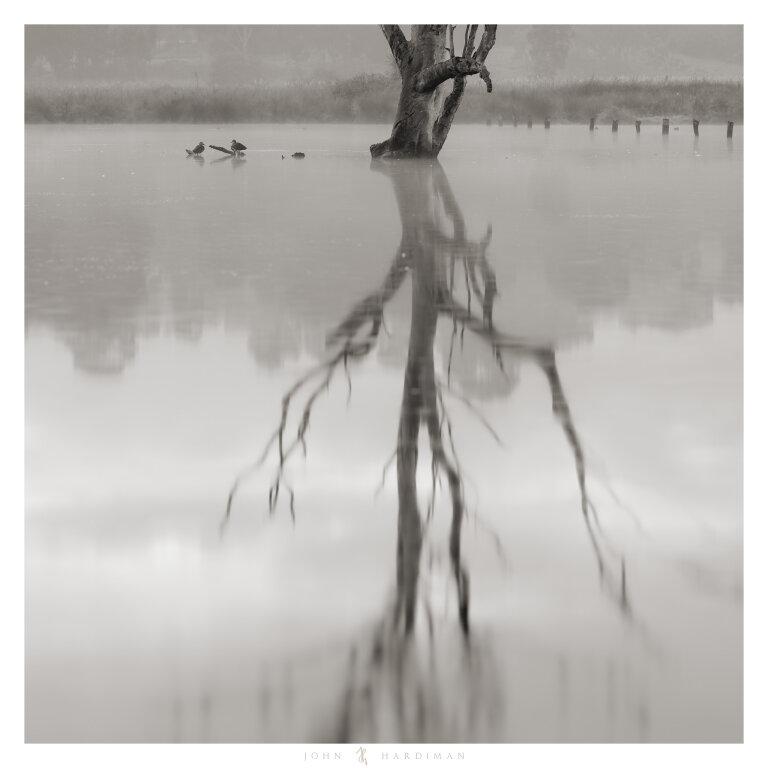 Banyule Wetlands, Victoria