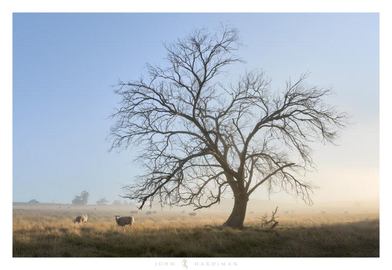 Tree in Colour, Yarra Valley, Victoria